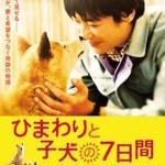 【おすすめ日本映画】「ひまわりと子犬の7日間」を観てペットのことを真剣に考えよう
